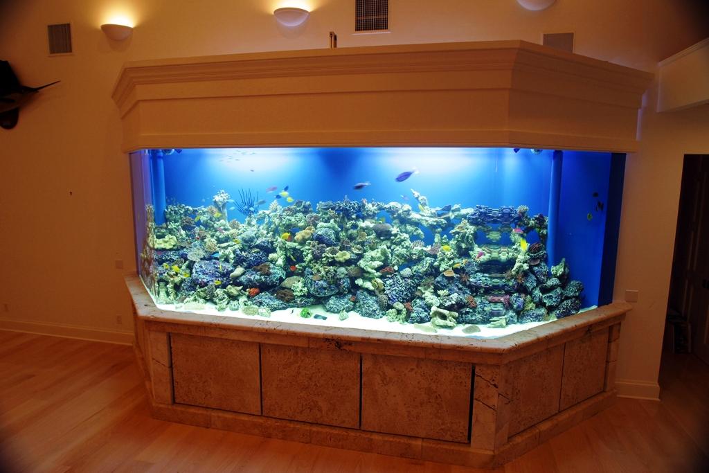 Photo gallery for 10000 gallon fish tank